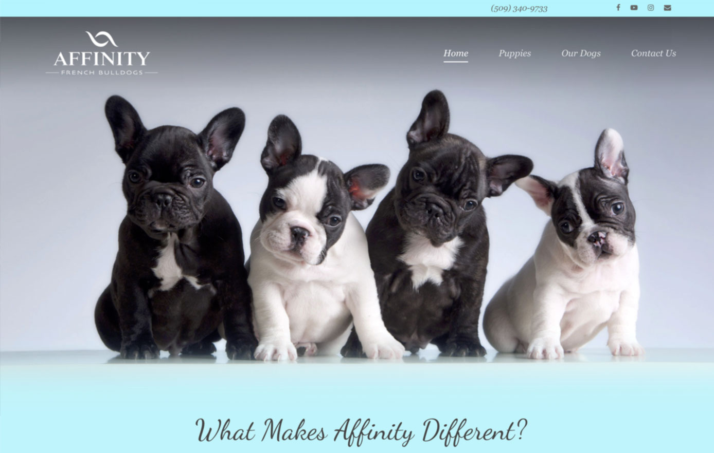 affinity french bulldogs, website development, website design